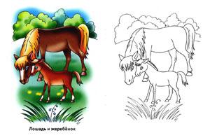 Детская раскраска - Лошадь и жеребенок