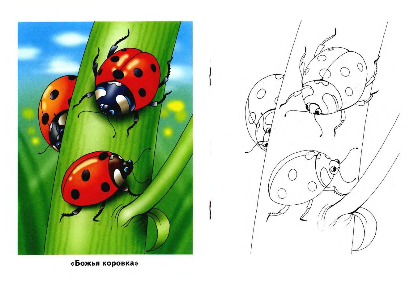 раскраска для детей насекомые развитие детей оригами