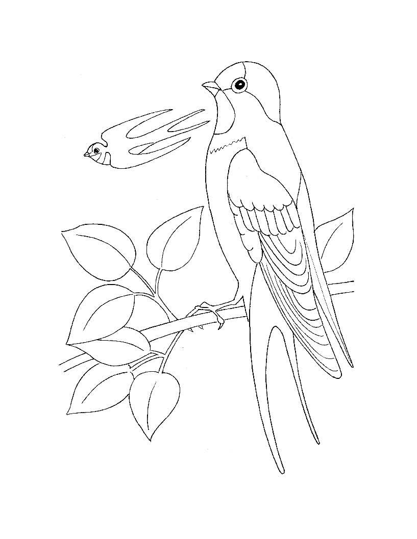 Раскраска для самых маленьких птицы