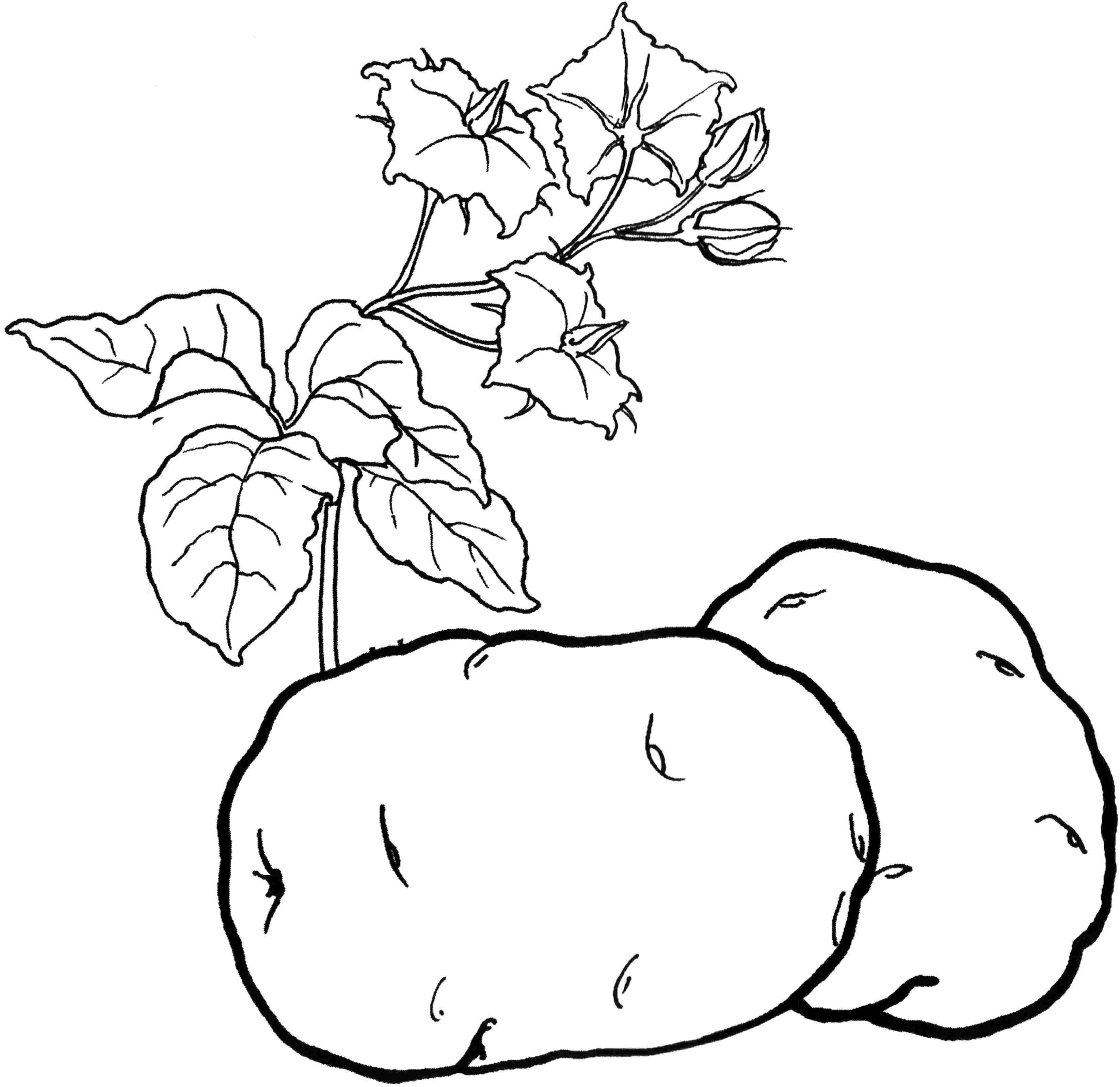 Картинки раскраска овощи фрукты