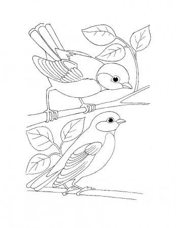 Раскраска для самых маленьких - Птицы