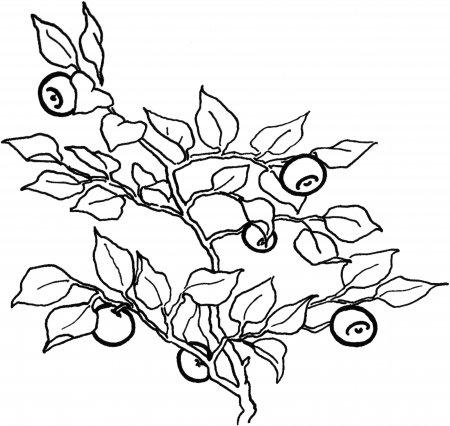"""Раскраска для детей """"Фрукты, овощи и ягоды"""""""