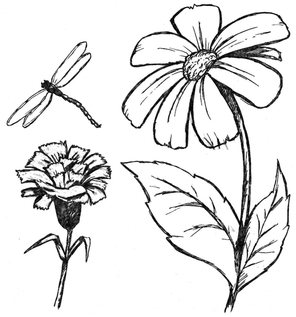 Картинки карандашом цветы для начинающих 4