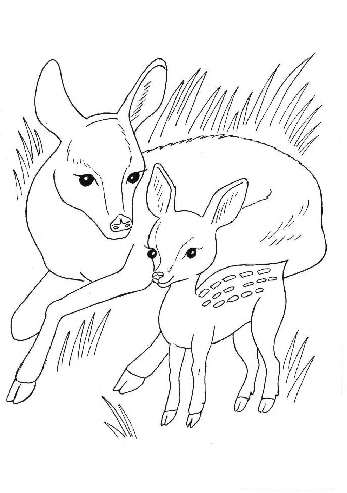 Детская раскраска про диких животных