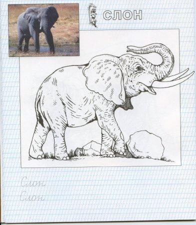 Развивающая раскраска для детей - Зоопарк