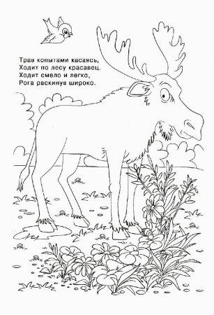 Раскраска-загадка с животными