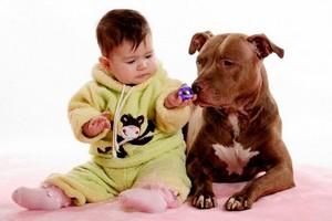 Учиться помогут здоровый сон и собака